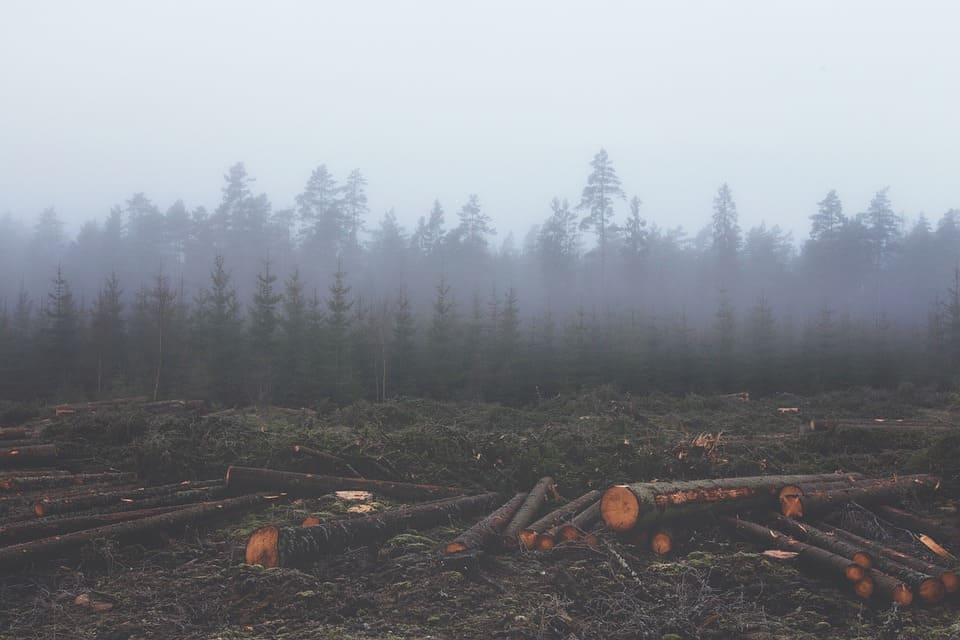 Mineração e desmatamento