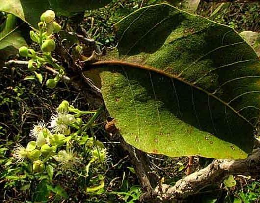 prospecção geoquímica em plantas